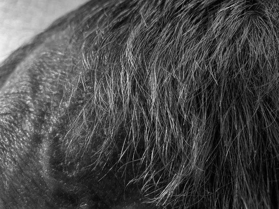 Haartransplantation bei grauen Haaren